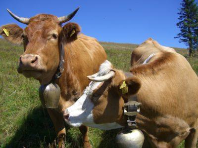 McDonald's no usará carne obtenida de animales tratados con antibióticos