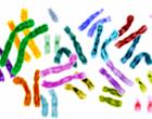 La ciencia da un paso más en el diseño de genomas artificiales