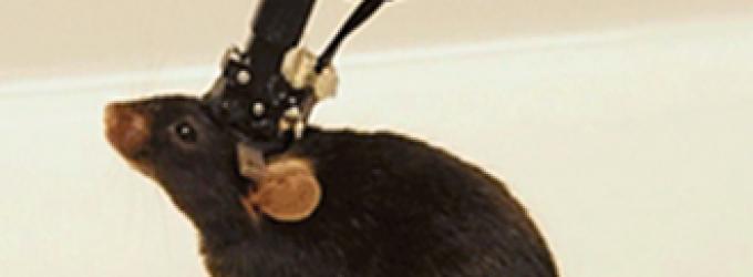 El estudio de la actividad de grupos neuronales experimenta un gran avance