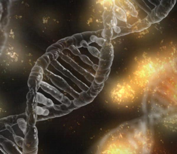 Investigadores españoles desarrollan una nueva técnica de modificación genética: iSuRe-Cre
