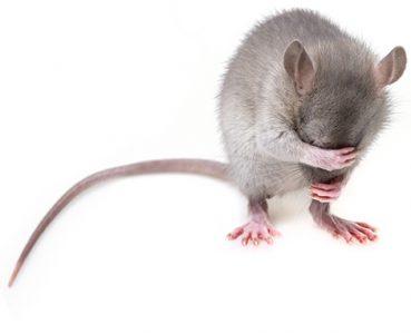Utilizan CRISPR para obtener descendencia de un solo sexo en ratones