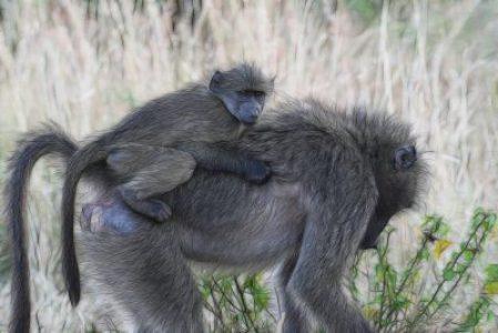 El medio ambiente puede influir en los animales y transmitirlo de madres a hijos