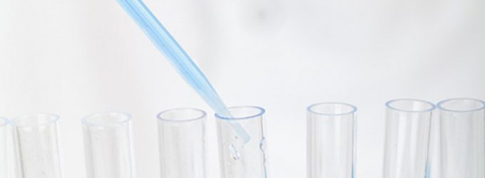 Consiguen mantener embriones de mono in vitro durante 20 días