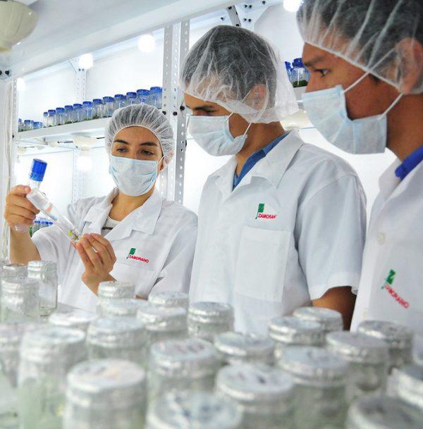 Se estudia el desarrollo de embriones de monos después de su implantación en el útero