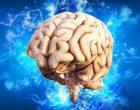 Se amplía la donación de tejido cerebral in vivo
