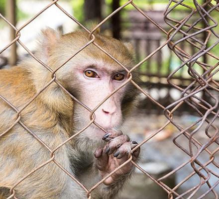 No siempre es factible trasladar a humanos los resultados de las experiencias realizadas en animales