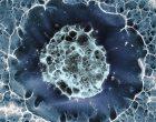 Las células madre podrían restaurar la visión en casos de ceguera