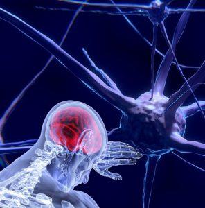 ¿Pueden regenerarse las neuronas?