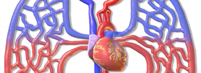 Se podrán producir vasos sanguíneos en el laboratorio