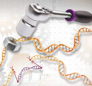 Cronología de los avances en genómica humana