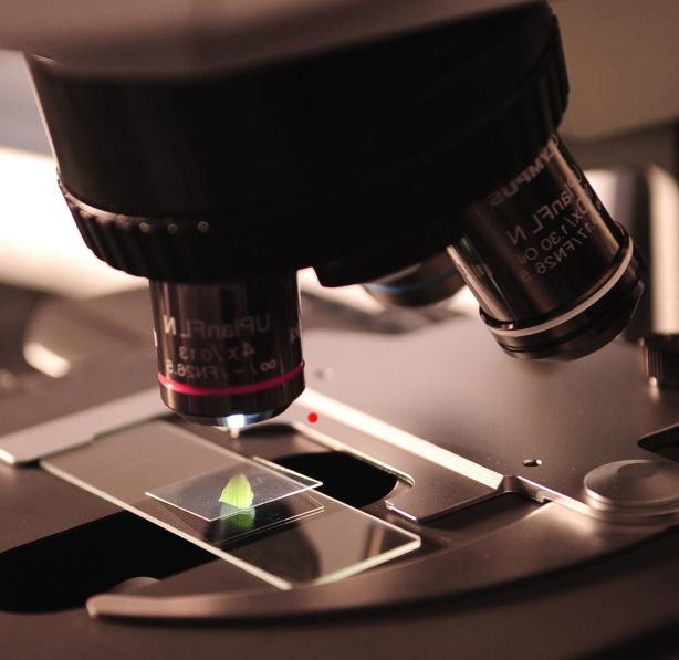Estados Unidos pone en marcha un plan estratégico para difundir entre sus ciudadanos el valor de la ciencia