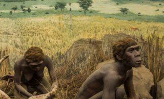 Los cerebros de los hombres primitivos eran más parecidos a los de los simios que a los del hombre moderno