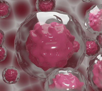 La manipulación de embriones humanos podría alargarse más allá de los 14 días legales