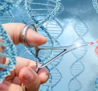 La OMS propone un marco de regulación global para la edición genética en humanos
